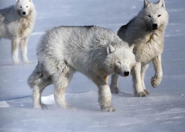 https://www.pmel.noaa.gov/arctic-zone/images/Wolf/mech_05.jpg