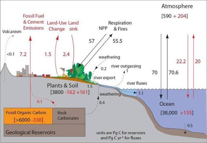 Carbon Cycle Graphics