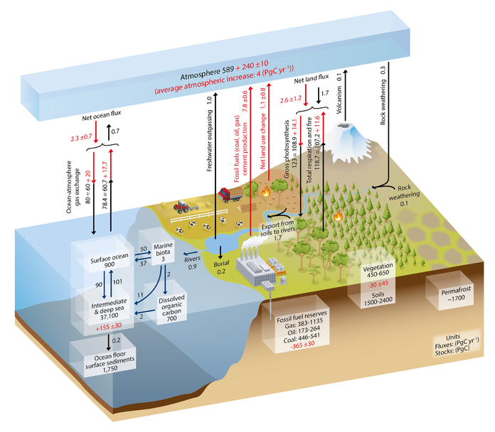 Fig 6.1 Schematic of the global carbon cycle