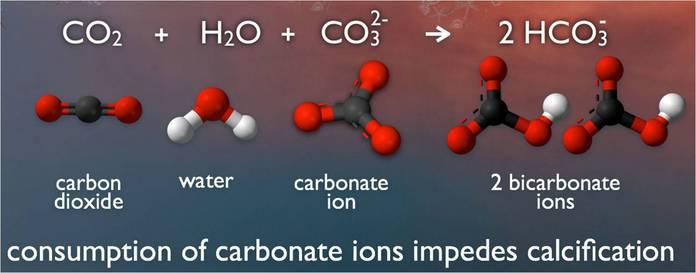 Seawater carbonate chemistry
