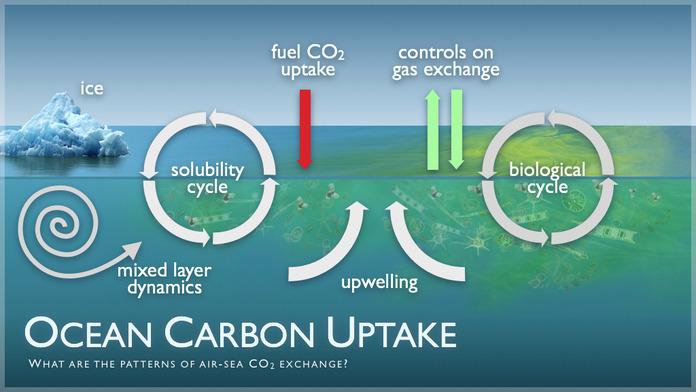 Ocean Carbon Uptake