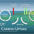 Ocean Carbon Uptake