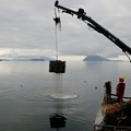 Acidifying Water Takes Toll On Northwest Shellfish