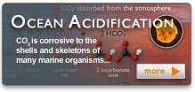 Ocean Acidification Button