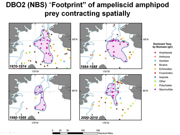 "DBO2 (NBS) ""Footprint of ampeliscid amphipod prey contracting spatially"
