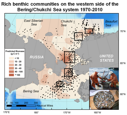 Rich benthic communities on the western side of the Bering/Chukchi Sea system 1970-2010