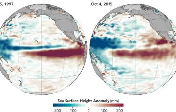 A comparison of the 2015 and 1997 El Niños, two of the strongest on record, in October of each respective year. Observations of sea surface heights and temperatures, as well as wind patterns, show surface waters cooling off in the Western Pacific and warming significantly in the tropical Eastern Pacific.  Credit: NASA's Earth Observatory.