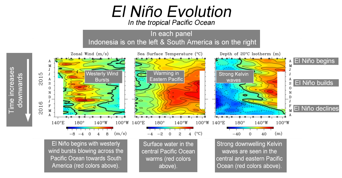El Nino evolution in the tropical Pacific Ocean