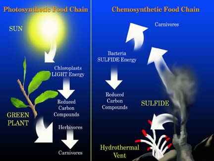 chain chemosynthesis diagram food Chemosynthesis vs photosynthesis ecosystems depend upon the ability of some organisms to convert inorganic compounds into food that other organisms can then exploit.