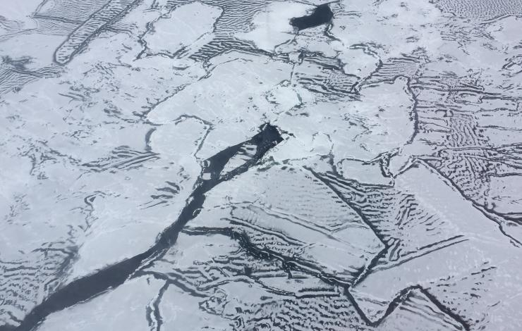 A mosaic of young sea ice captured during a flight campaign over the Chukchi Sea launching various atmospheric and oceanographic probes and floats.