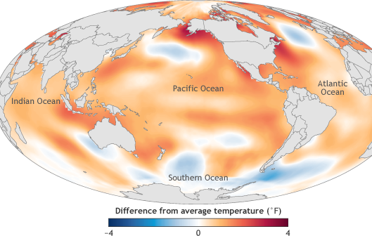The image is of ocean surface temperature in 2016 compared to the 1981-2010 average. Despite the weakening 2015/16 El Niño event in 2016, the global average sea surface temperature in 2016 beat 2015 as the warmest year on record by a narrow margin. Image credit: NOAA Climate.gov map, adapted from Figure 3.1a in State of the Climate in 2016.