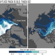 The proportion of old, thick ice in the Arctic's winter maximum ice pack has dropped from more than a third in the mid-1980s to barely just 1 percent today