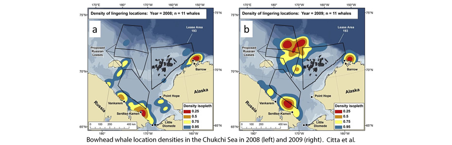 Bowhead whale location densities